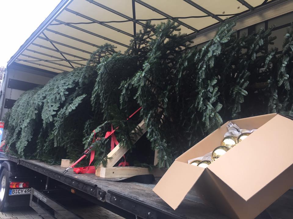 kaeser hilft weihnachtsbaum der queen zu schm cken. Black Bedroom Furniture Sets. Home Design Ideas
